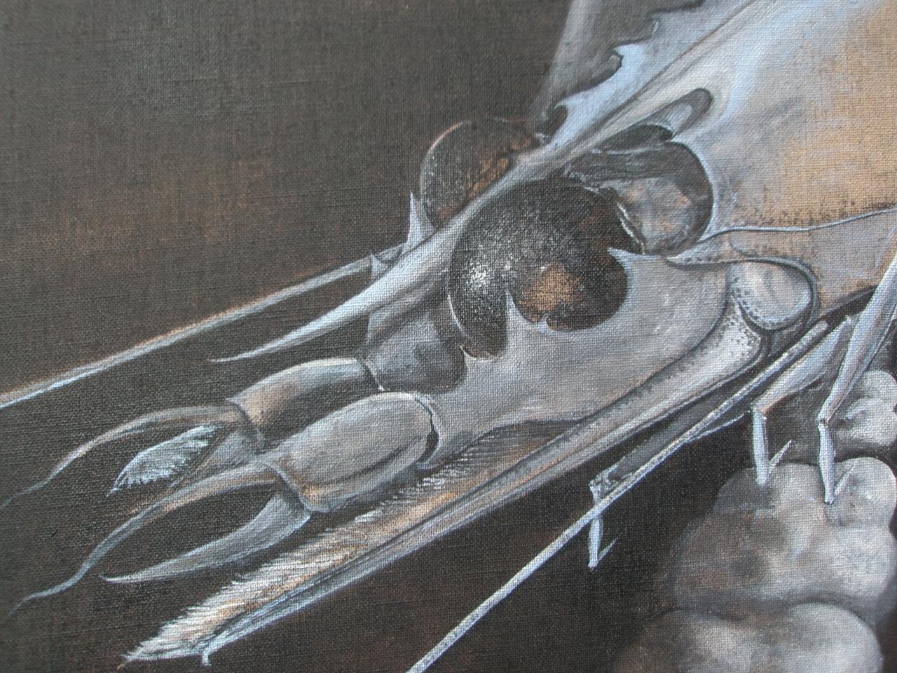 Céphalée de crevette